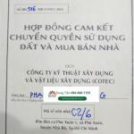 Luu Ban Nhap Tu Dong