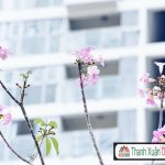 Can Ho Midtown The Signature Can Ban Thiet Ke 2 Phong Ngu View Noi Khu