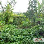 Biet Thu Lien Ke Dragon Parc 1 Nha Dep Gia Tot 14 Ty